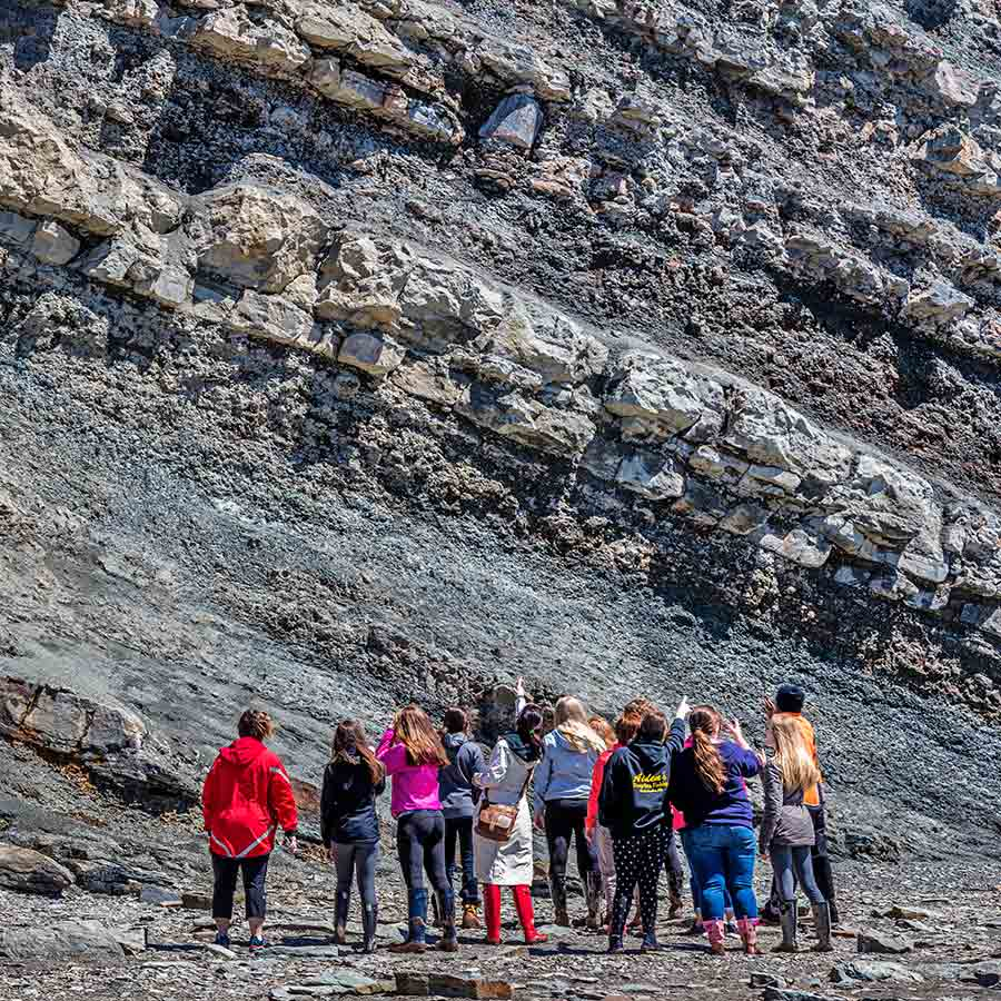 A group of students looking at an exposed fossil tree stump in the cliffs